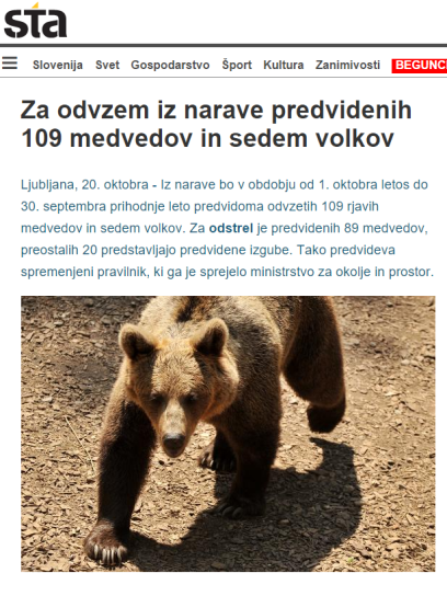 STA medvedi Majcen